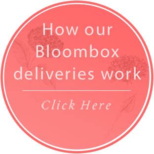 Buy a Bloombox as a gift